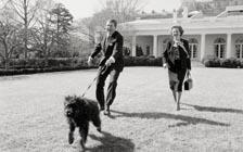 """独脚鸡、鬣狗、浣熊……白宫历史上的""""神奇动物""""们"""