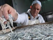 为何幼鳗是西班牙最昂贵的食物?