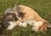过剩动物的两难选择:节育或安乐死