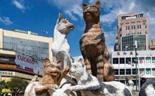 """在马来西亚""""猫城""""古晋寻访猫的足迹"""
