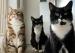猫为什么呜呜叫?原因没你想的那么简单