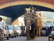 自动驾驶汽车如何开上印度拥挤的街道