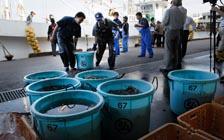 日本渔业仍在核阴影下