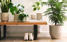 家居绿植美学:把大自然带回家(VIP)