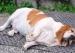 肥胖问题:如何解除人与动物的发胖危机