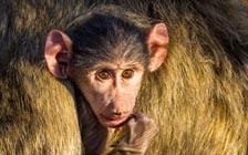 寻访赞比亚的野生动物秘境