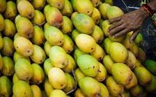 印度旅行,一只芒果引发的腹泻