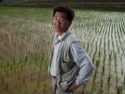 日本消费者移情外国大米