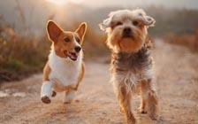 调查:英国五分之一的人宁愿养狗也不恋爱