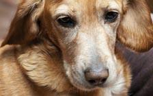 动物行为学:狗也能读懂人心