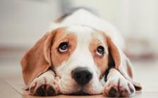 动物也会伤心难过吗?你可能不会相信